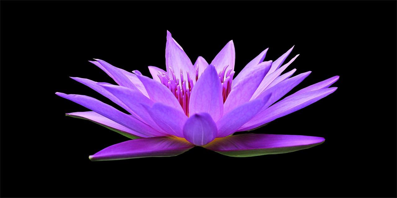「出藍の誉れ」の意味と使い方
